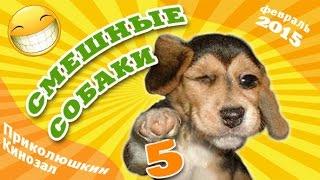 Смешные собаки 5 ● Приколы с животными 2015 ● Funny Dogs · part 5 ● Finny vine compilation 2015