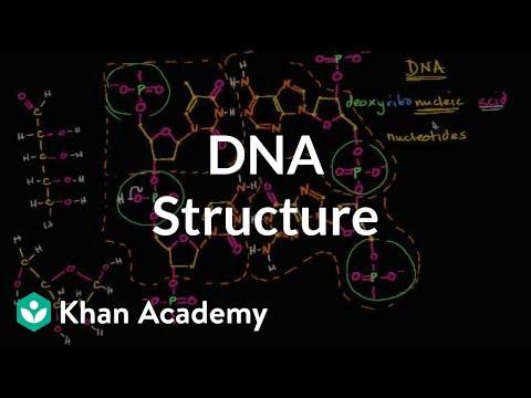 Molecular Structure Of DNA | Macromolecules | Biology | Khan Academy