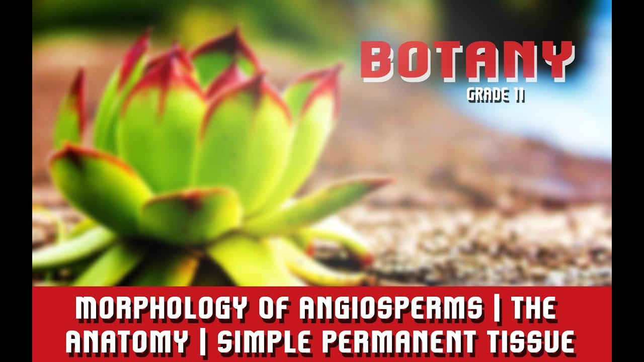 Morphology Of Angiosperms   The Anatomy   Simple Permanent Tissue   Introduction & Types   Section 3