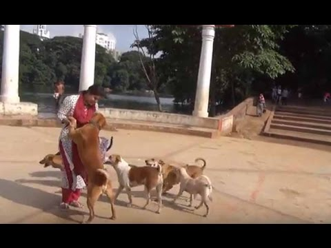 Love for dogs || ধানমণ�ডি লেকের ক�ক�রদের জন�য �ক তর�ণীর বিরল ভালোবাসা