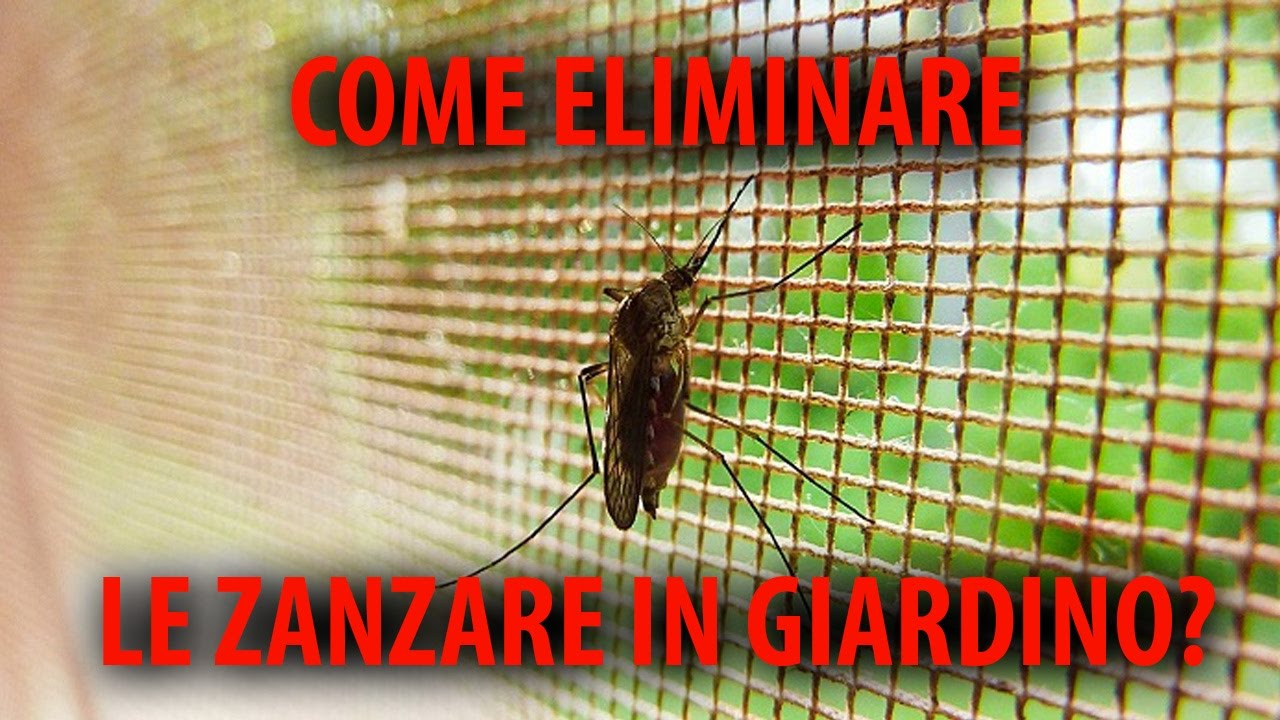 Troppe Mosche In Giardino come eliminare le zanzare in giardino