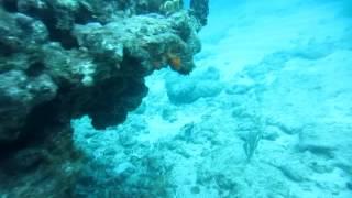 Davis Reef Tavernier Islamorada  Florida