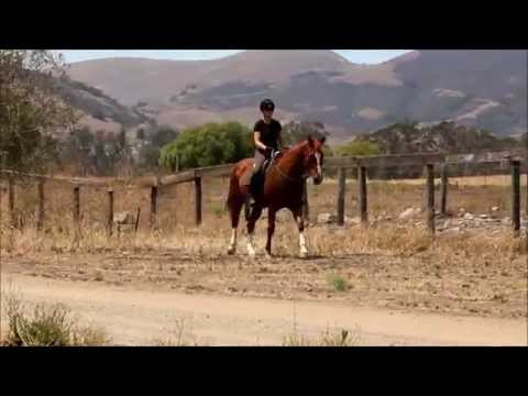 """""""Tony"""" QH for sale, ranch/trail"""