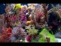 Gorgonian Coral Discoveries - UH Manoa - Sonia Rowley
