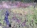 Обзор чужих огородов. Отпугиватели ворон.
