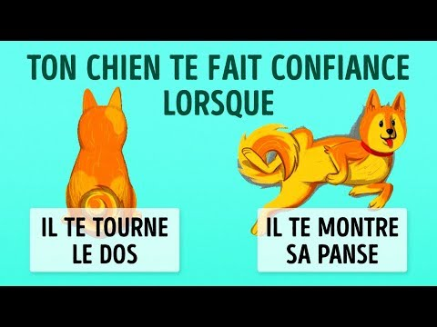 Eduquer Un Beauceron - Astuces - Education canine - Tutorial