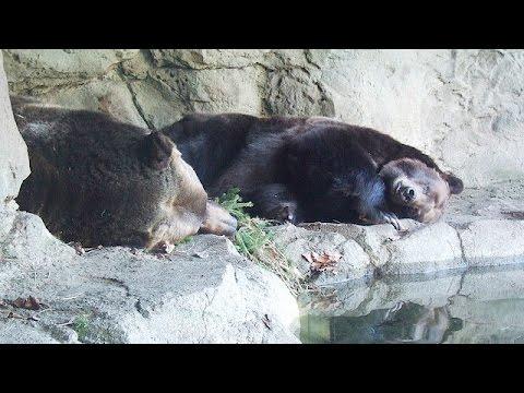 Hayvanlarda kış uykusu ve yaz uykusu belgeseli