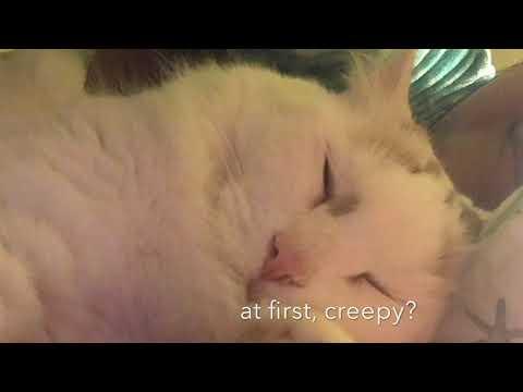 Turkish Van Cat Wakes Me Up