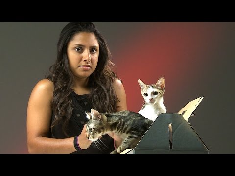 Thumbnail: People Who Hate Cats Meet Kittens