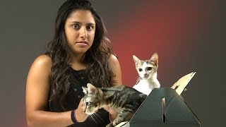People Who Hate Cats Meet Kittens thumbnail