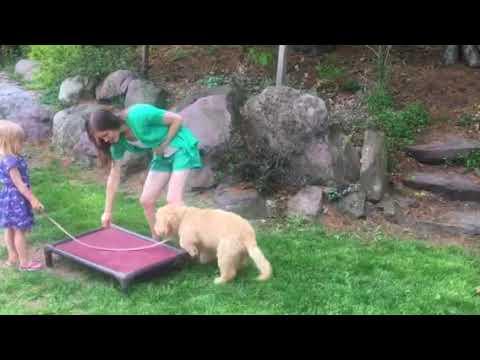 Little dog trainer