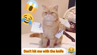 Funny Animal Videos 🤣🤣🤣❤ Funny animals Fails❤ Funny 2021