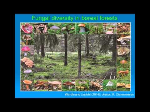 GSBI - David Wardle (Swedish University of Agricultural Sciences, Sweden)
