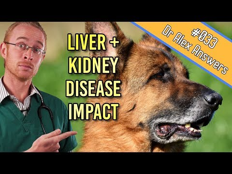 Liver And Kidney Disease In Dogs - Early Treatment Really Helps! - Dog Health Vet Advice
