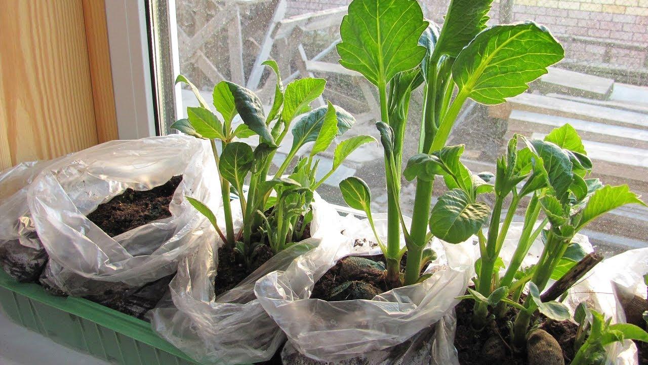 Как проклюнуть семена за 30 минут. Проверка на всхожесть. Сад и .