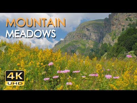 4K Mountain Meadows - Cricket & Grasshopper Sounds - Wild Flowers - Relaxing Nature Video - Ultra HD
