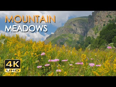 4K Mountain Meadows - Cricket & Grasshopper Sounds - Wild Flowers - Relaxing Nature Video - Ultra HD