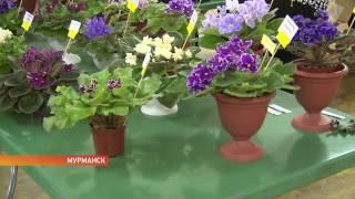 Как зовут фиалку? Коллекционеры цветов поделились секретами растениеводства