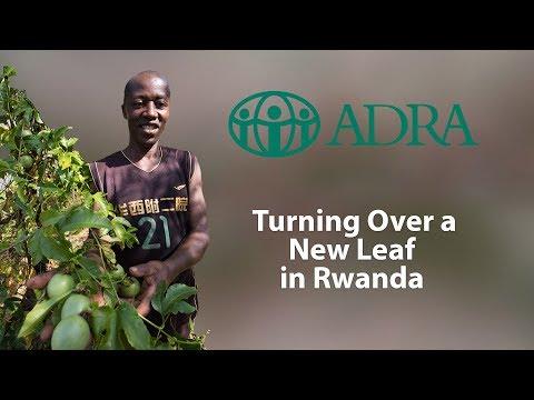 Turning Over a New Leaf in Rwanda