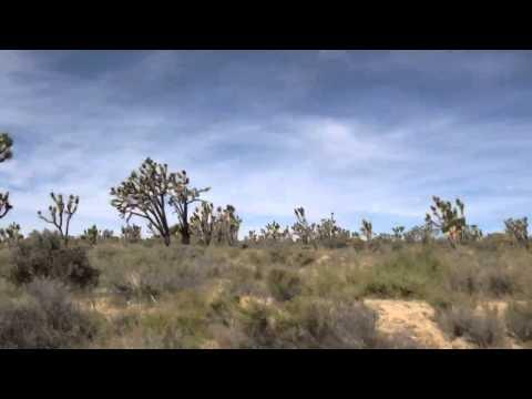 Kakteen Wald Mojave Wüste