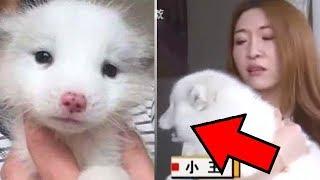 Девушка думала, что купила щенка, но поняла, что что-то не так, когда он напугал всех местных собак