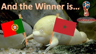 World Cup Russia 2018. The Guessing Frog. Portugal v Morocco
