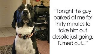 Times Dogs Surprised Humans With Their Incredibly Heroic Acts