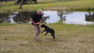 When to Start Collar Conditioning