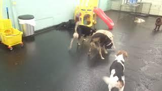 Video The Barking Lot - 10/13/18 -MAH00032 download MP3, 3GP, MP4, WEBM, AVI, FLV Oktober 2018