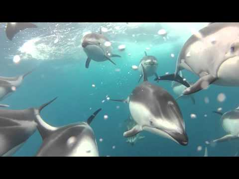 Amazing Dolphins Video