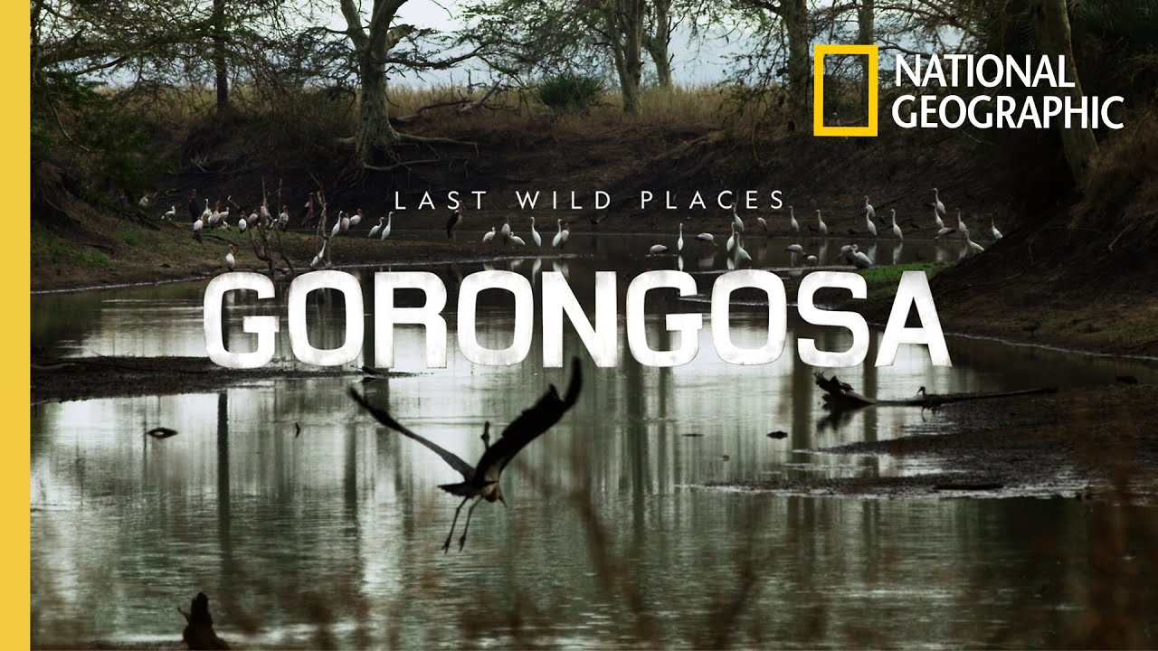 Discover How Conservation is Being Redefined in Gorongosa National Park | National Geographic