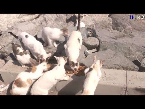 הקרב החדש בירושלים: האכלת חתולים