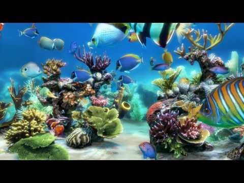 Sim Aquarium scene 1 (4K)