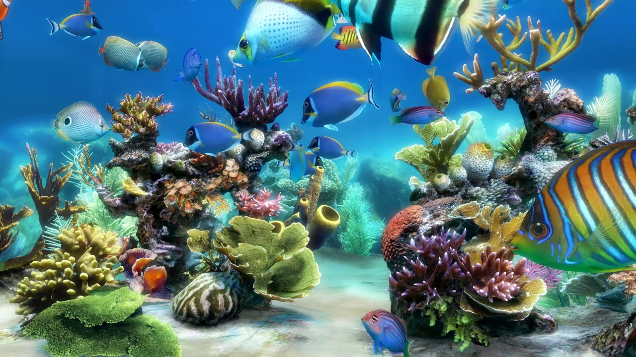 Desktop Aquarium 3d Live Wallpaper Windows 7 Sim Aquarium Scene 1 4k Youtube
