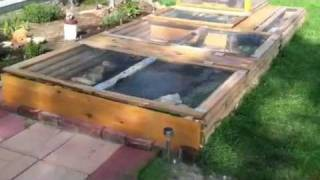 Large Outdoor Turtle & Bearded Dragon Habitat & Setup