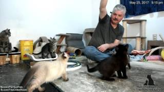 Gaia's Kittens - Evening 5-25 thumbnail
