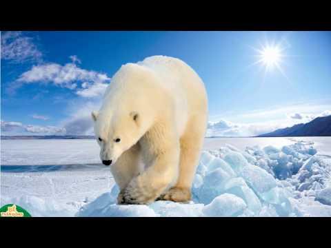Hình ảnh và tiếng kêu các con vật | em học tiếng kêu con nhím sư tư gấu cáo | Bé thần đồng