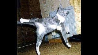 Подборка приколов с Котами и Кошками. Смешные кошки. Неудачи животных.