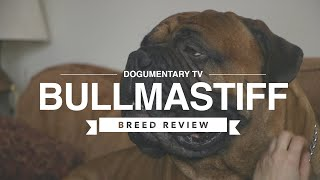 BULLMASTIFF BREED REVIEW
