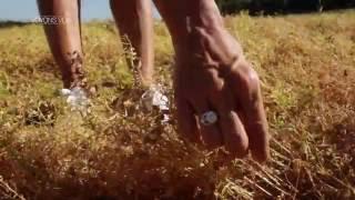 Bande-annonce Voyons voir : la lentille verte du Puy-en-Velay