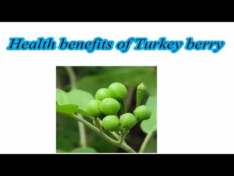 Health benefits of Turkey berry