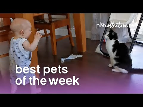 Cat and Baby Playtime | Best Pets of the Week