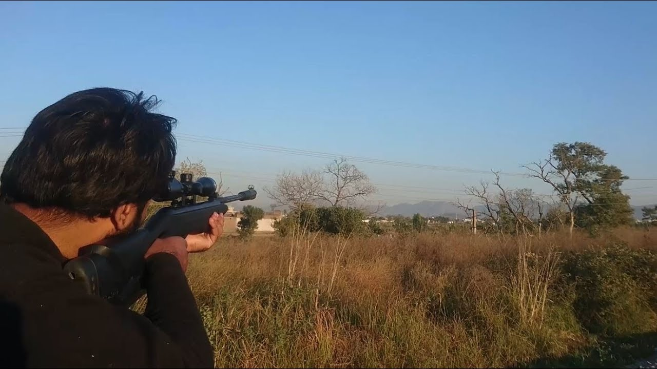 kiskadee(tilyar) And Dove Hunting With Gamo And Diana Air Guns Urdu/Hindi
