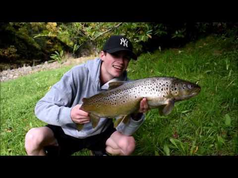 MONSTER Sea Run Brown Trout | Stream Fishing NZ