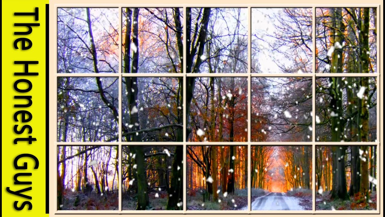Winter Window Scene. Forest (living Wallpaper with Ambient ...