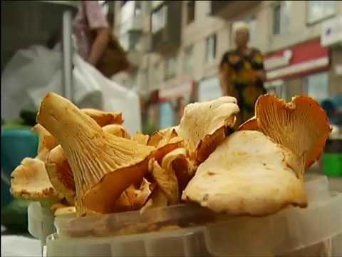 мицелий грибов из красноярска