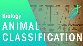 Animal Classification | Evolution | Biology | Fuseschool