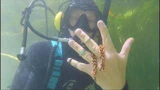 Found Biggest Chain Gold Rings Ammunition & Cash River Treasure Hookah Dive