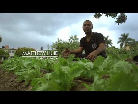 Plant Jamaica still growing