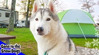 Camping With Dogs | First Trip of 2018 | Heading to Upper Michigan